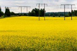Vad kan du om energi och elmarknaden?