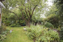 Här är nya trädgårdsskräcken